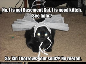 No, I is not Basement Cat. I is good kitteh. See halo?