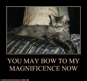 YOU MAY BOW TO MY MAGNIFICENCE NOW