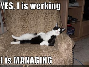 YES, I is werking  I is MANAGING