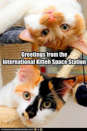 Greetings from the  International Kitteh Space Station