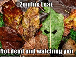 Zombie Leaf.   Not dead and watching you
