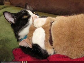 Cyoot Kitteh of teh Day: Dere, Dere...It Be OK.  Hugz Mayk It Bettr.