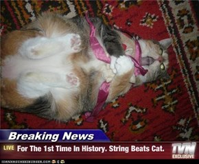 Breaking News - For The 1st Time In History. String Beats Cat.