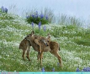 Acting Like Animals: Deerly Beloved