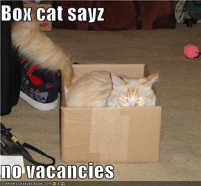 Box cat sayz  no vacancies