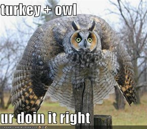 turkey + owl  ur doin it right