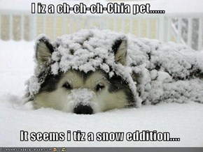 I iz a ch-ch-ch-Chia pet......    It seems i tiz a snow eddition....