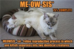 ME-OW-SIS*