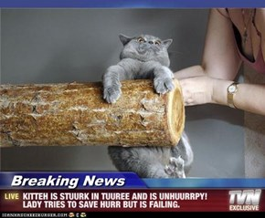 Breaking News - KITTEH IS STUURK IN TUUREE AND IS UNHUURRPY! LADY TRIES TO SAVE HURR BUT IS FAILING.