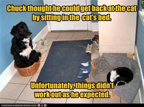 Chuck thought he could get back at the cat  by sitting in the  cat's bed.