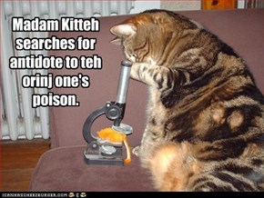 Madam Kitteh searches for antidote to teh orinj one's poison.