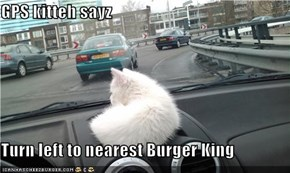 GPS kitteh sayz  Turn left to nearest Burger King