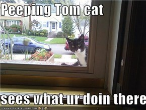 Peeping Tom cat  sees what ur doin there