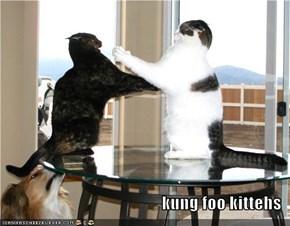 kung foo kittehs