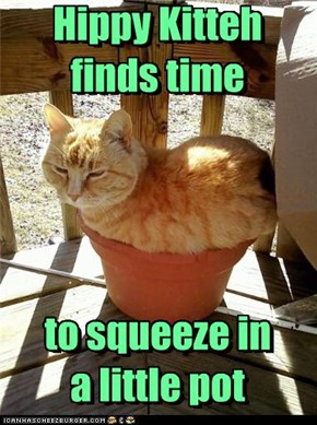 Hippy Kitteh finds time     to squeeze in a little pot