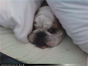 Rocky hiding