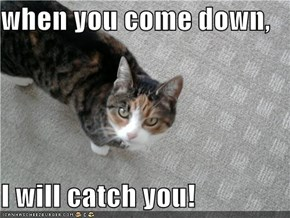 when you come down,  I will catch you!