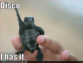 Disco, i haz it