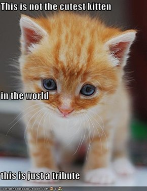 This is not the cutest kitten  in the world  this is just a tribute