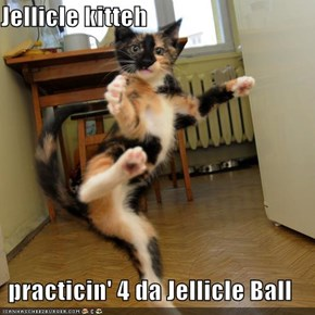 Jellicle kitteh  practicin' 4 da Jellicle Ball