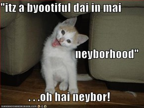 """itz a byootiful dai in mai neyborhood"" . . .oh hai neybor!"