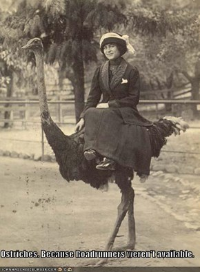 Ostriches. Because Roadrunners weren't available.