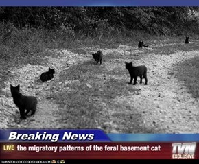 Breaking News - the migratory patterns of the feral basement cat
