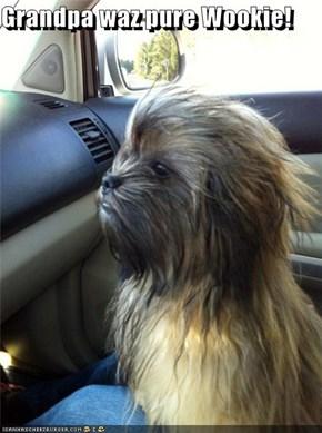 Grandpa waz pure Wookie!