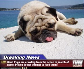 Breaking News - Giant Pugs are crawling from the ocean in search of noms. Please do not attempt to feed them.