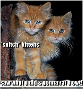 """snitch"" kittehs saw whut u did & gonna rat u owt!"