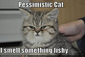 Pessimistic Cat  I smell something fishy