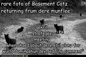 rare foto of Basement Catz returning frum dere munflee