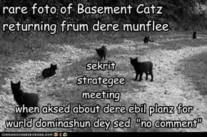 rare foto of Basement Catz returning frum dere munflee
