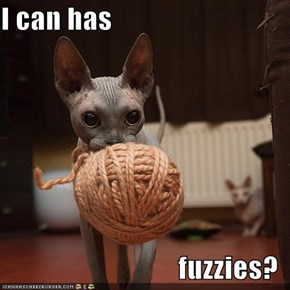 I can has  fuzzies?
