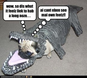 Pugadile or CrocoPug