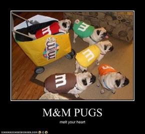 M&M PUGS