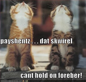 payshentz . . . dat skwirel cant hold on foreber!