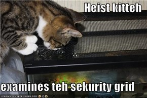 Heist kitteh  examines teh sekurity grid