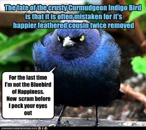 Temper Temper,Curmudeon Indigo Bird