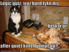 Logic quiz: wuz burd lyke dis befoar or affer quiet kitteh jumpt up?