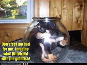 Don't feel too bad for me.  Imagine what Kitteh did with the goldfish!