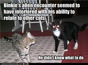 Binkie's alien encounter seemed to have interfered with his ability to relate to other cats