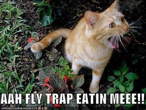 AAH FLY TRAP EATIN MEEE!!