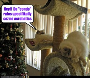 "Hey!!  Da ""condo"" rules specifikally sez no acrobatics"
