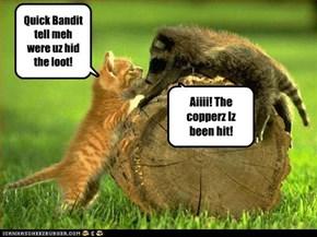 Quick Bandit tell meh were uz hid the loot!