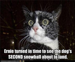 Ernie turned in time to see the dog's  SECOND snowball about to land.