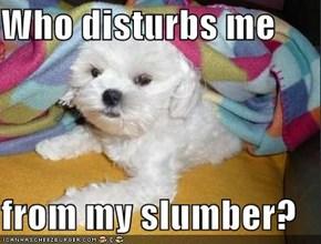 Who disturbs