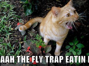 AAH THE FLY TRAP EATIN MEEE!