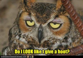 Do I LOOK like I give a hoot?