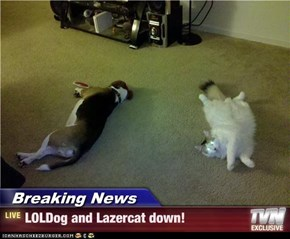 Breaking News - LOLDog and Lazercat down!